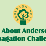 THE ANDERSON PROPAGATION CHALLENGE